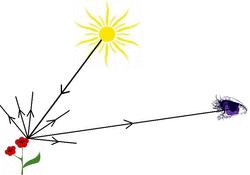 Fonctionnement optique de l'oeil - illustration 1