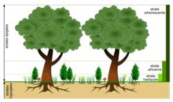 Les écosystèmes, interactions entre les êtres vivants, entre eux et avec leur milieu - illustration 1