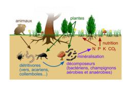 Les écosystèmes, interactions entre les êtres vivants, entre eux et avec leur milieu - illustration 3