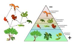Les écosystèmes, interactions entre les êtres vivants, entre eux et avec leur milieu - illustration 4