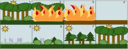 L'humanité et les écosystèmes - illustration 1
