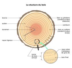 une ressource naturelle le bois r viser le cours sciences premi re es assistance. Black Bedroom Furniture Sets. Home Design Ideas