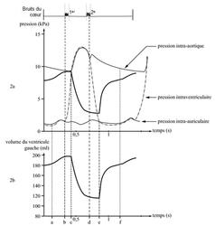 Anatomie et physiologie de l'appareil cardiovasculaire - illustration 2