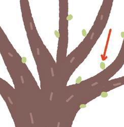 Lire les graphies « ge », « gu » - illustration 1