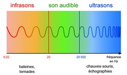 IV. La fréquence des ondes sonores