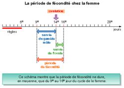 La fertilite chez la femme