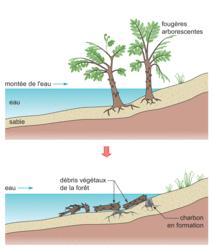 La gestion des ressources non renouvelables - illustration 1