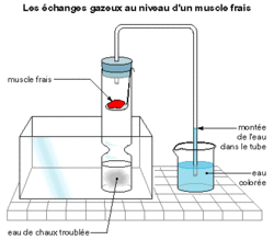 Les échanges des organes avec le sang - illustration 2