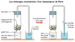 Les échanges respiratoires - illustration 2