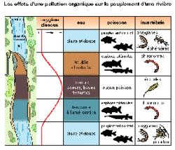 Les effets d'une pollution organique sur le peuplement d'une rivière