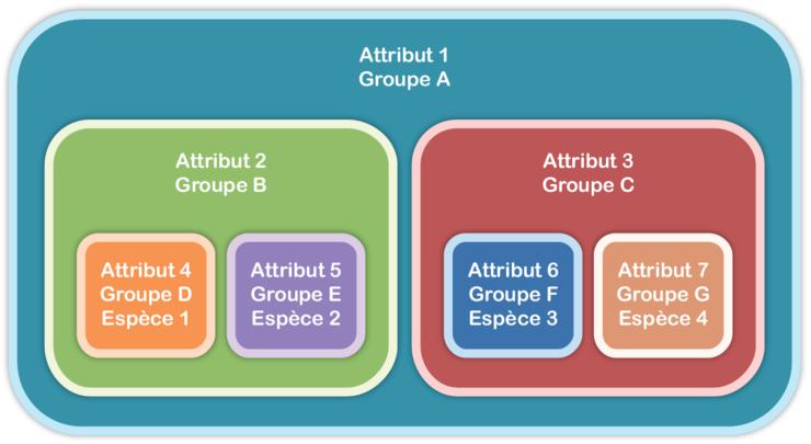 Télécharger exercice arbre de parenté 6ème PDF | groupes ...