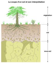 Le sol, un milieu particulier - illustration 1