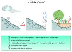 Le sol, un milieu particulier - illustration 4