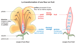 La dispersion des plantes à fleurs - illustration 1