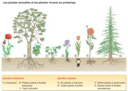 Les végétaux au fil des saisons - illustration 1