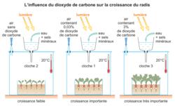 Les besoins nutritifs des plantes vertes - illustration 1