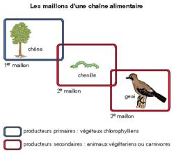 Développement des êtres vivants et production de matière - illustration 2
