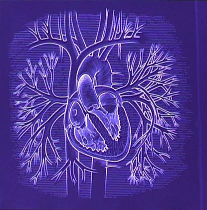 Schéma du système cardiovasculaire - illustration 1