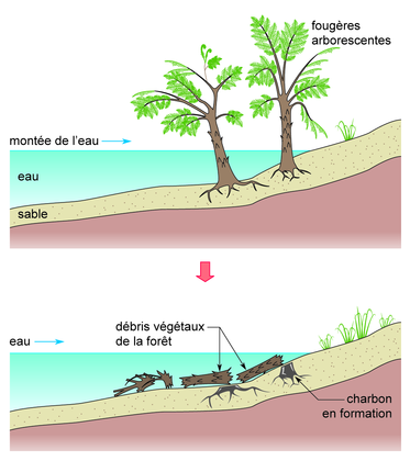 La formation du charbon - illustration 1