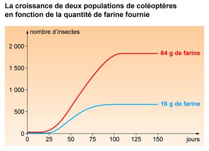 Comparaison de la croissance de deux populations de coléoptères - illustration 1