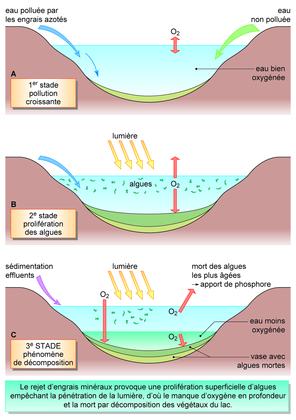 L'eutrophisation d'un lac par des engrais azotés - illustration 1