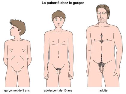 La puberté chez le garçon - illustration 1