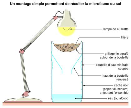 Montage permettant de récolter la microfaune du sol - illustration 1