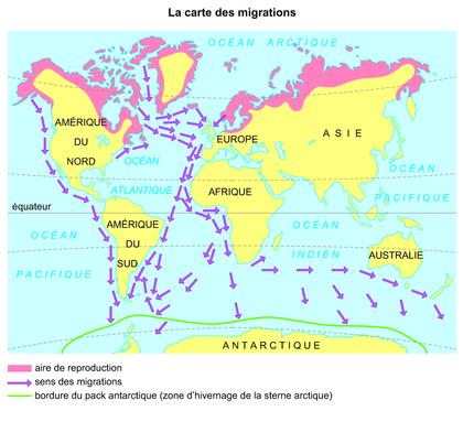 La carte des migrations - illustration 1