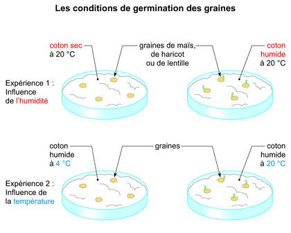Les conditions de germination des graines - illustration 1