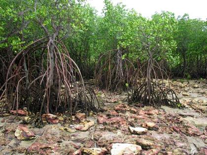 Le rôle de l'homme dans la destruction des mangroves