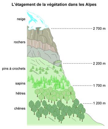 L'étagement de la végétation dans les Alpes - illustration 1