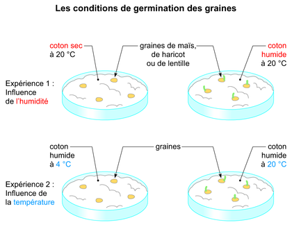 Les conditions de germination des graines - illustration 1