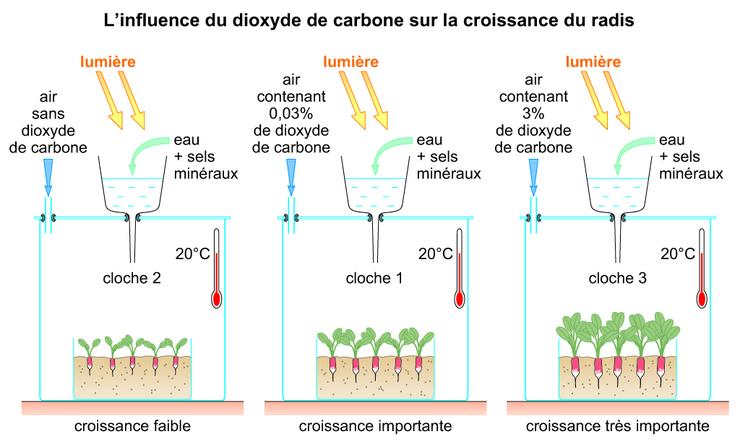 Image 6sra0202 l 39 influence du dioxyde de carbone sur la for Plante 21 svt