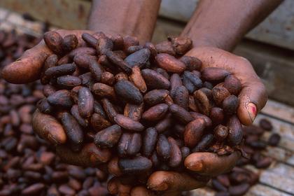Fèves de cacao fermentées et séchées