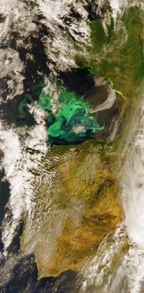Prolifération du phytoplancton dans l'océan Atlantique (image satellite)