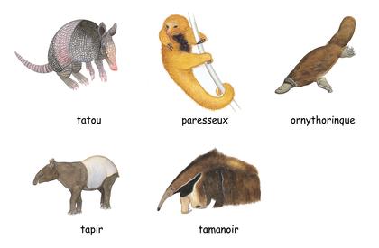 Drôles d'animaux - illustration 1