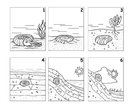 La formation d'un fossile d'ammonite - illustration 1