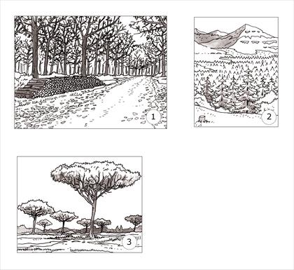 Les forêts des climats tempérés - illustration 1