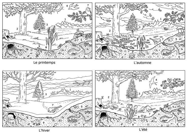 Image fde09sc02i01 un bosquet au fil des saisons base documentaire en sciences ressources - Dessin 4 saisons ...