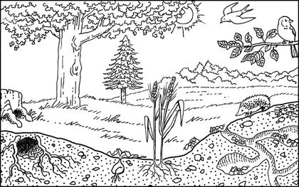 Un bosquet en été - illustration 1