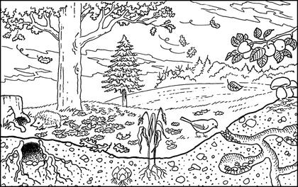 Un bosquet en automne assistance scolaire personnalis e et gratuite asp - Image automne gratuite imprimer ...
