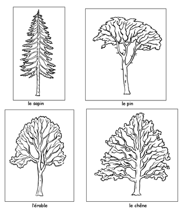 Feuillage caduc ou feuillage persistant - illustration 1