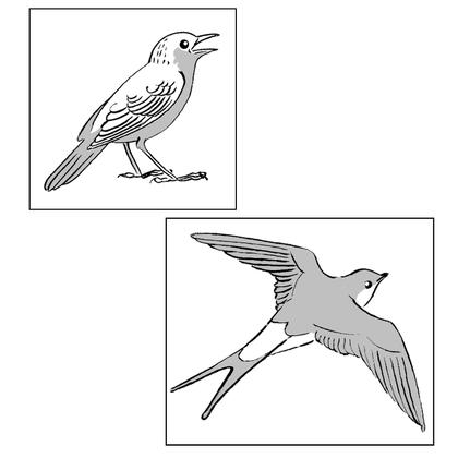 Deux oiseaux migrateurs : l'hirondelle et le rossignol - illustration 1