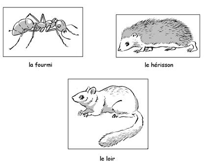 Les animaux qui hibernent - illustration 1