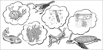 Les différents ovipares - illustration 1