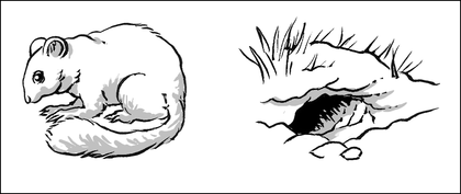 L'hibernation du loir - illustration 1