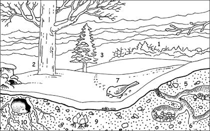 Un bosquet en hiver - illustration 1