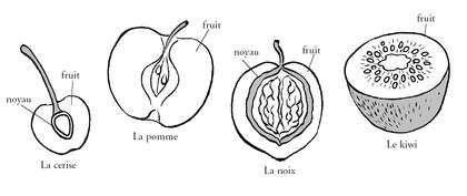 Les différentes graines - illustration 1