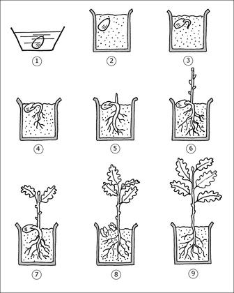 Plantation et germination d'une graine - illustration 1