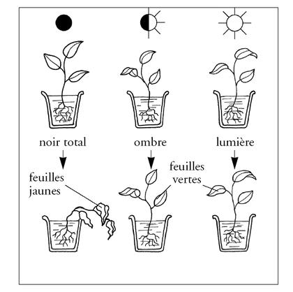 Les besoins d'une plante (2) - illustration 1
